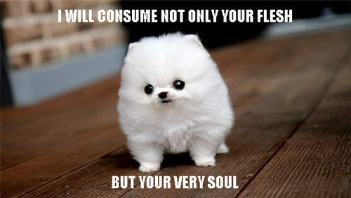 Funny Animal Memes : Funny animal memes are the best craveonline