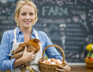 People Can Now Rent A Chicken