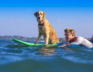 Surfing Dogs And Their Owners Raise Money For Charity