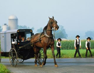 10 Surprising Facts About The Amish That Are Actually True