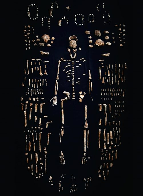 Robert Clark, Remains of Homo naledi from the Rising Star Cave in South Africa.