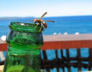 Drunk Wasps On Stinging Rampages Seem To Like Partying Hard