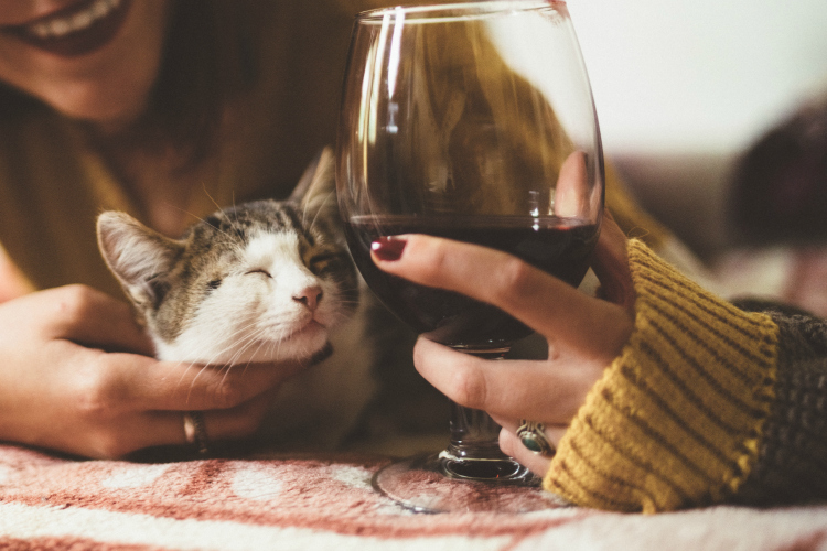 Drink Wine With Your Cat Week