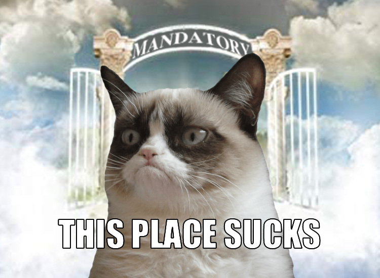 The Mandatory Monday Memes To Say Goodbye To Grumpy Cat