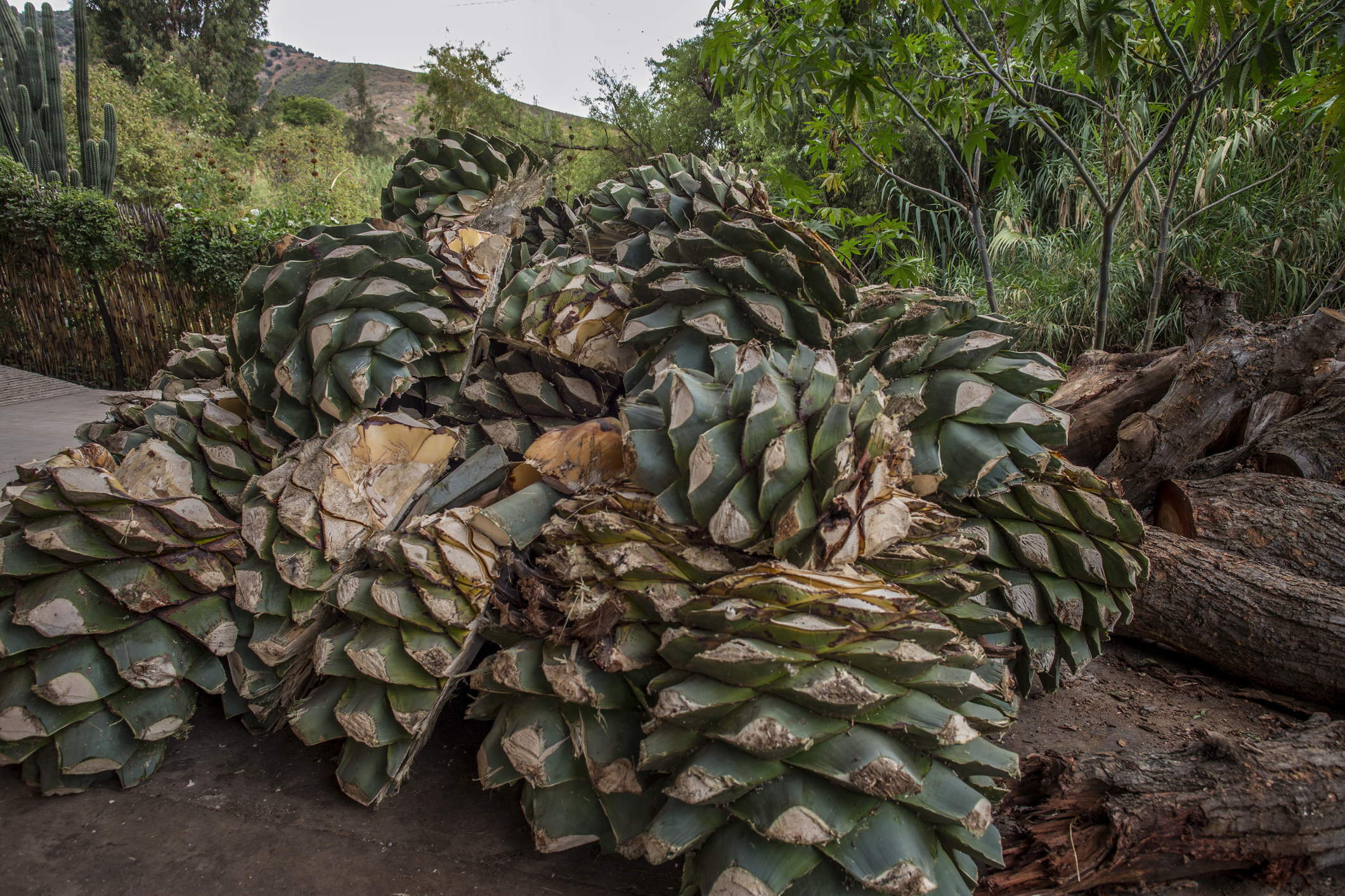 Real mezcal comes from one area.