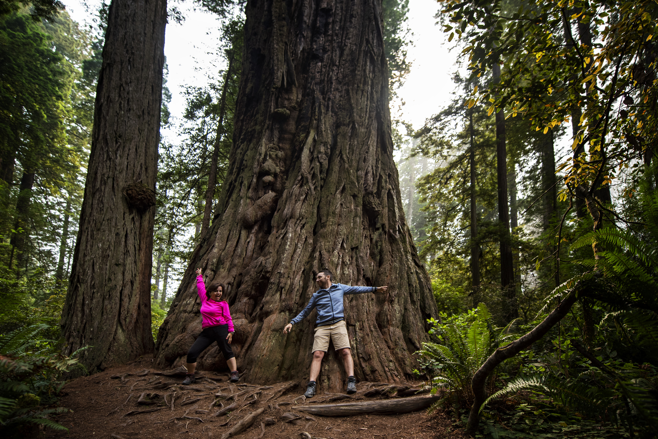 8. Redwood National Park (California)