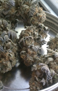 """""""Girl Scout Cookie"""""""