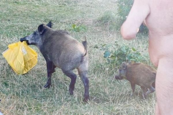 Nude Man Caught Chasing Wild Boar That Stole His Laptop, A Visual That Perfectly Depicts 2020