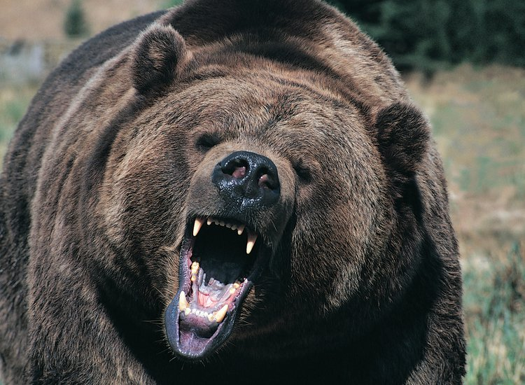 Man Survived as Bear Food for a Month by Drinking His Own Urine